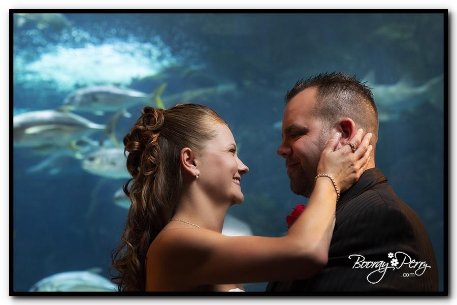 Florida Aquarium wedding 16