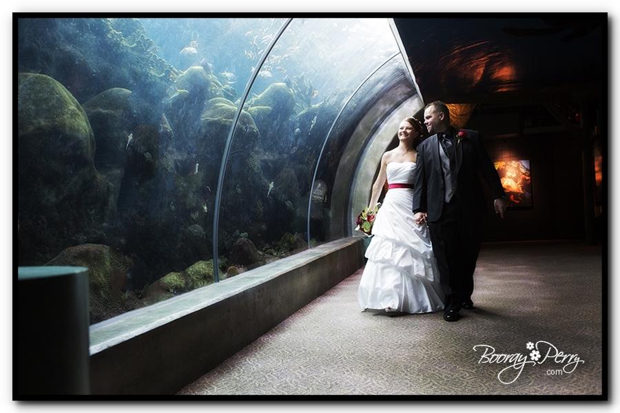 Florida Aquarium wedding 17