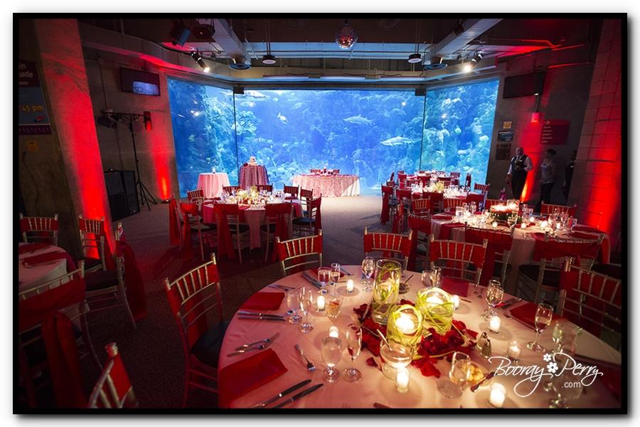 Florida Aquarium wedding 18