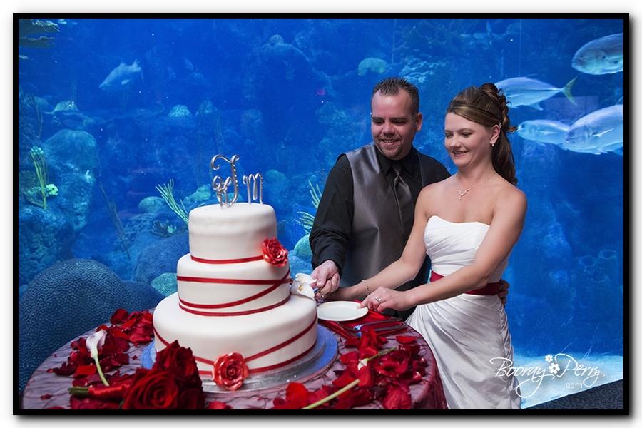 Florida Aquarium wedding 23