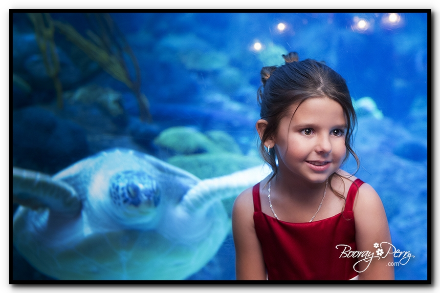 Florida Aquarium wedding 26